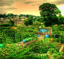 Mirfield allotment by m4rtys