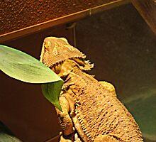 Sad Iguana by Jane Neill-Hancock