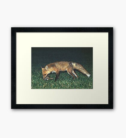 Fox with Rabbit Framed Print