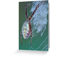 Dew Covered Spider Greeting Card