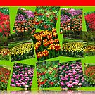 Postcards from Holland - Dutch Bulbs by BlueMoonRose