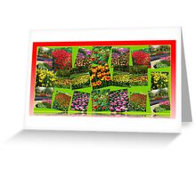 Postcards from Holland - Dutch Bulbs Greeting Card