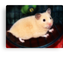 Pipi - the new hamster Canvas Print