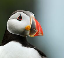 A Portrait of a Puffin by Owen Burke
