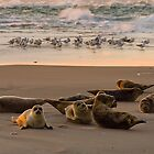 Seals and gulls at Skagen by Lars Clausen