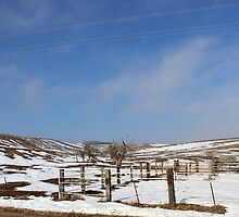 Winter Pasture by dalemark