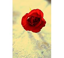 One Simple Rose Photographic Print
