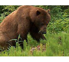 Brown Bear Photographic Print