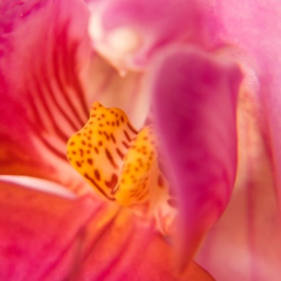 orchid by dominiquelandau