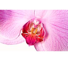 orchid 1 Photographic Print
