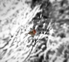 Winter Bird by doorfrontphotos