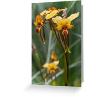 The Donkey Orchid Greeting Card
