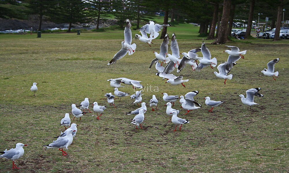 Seagulls #1 by Evita