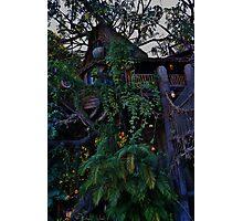 Tarzan's Tree House Photographic Print