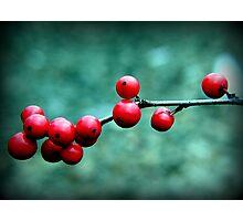 Winterberry Photographic Print