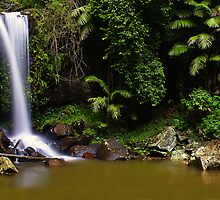 Curtis Falls - Mt Tamborine by Michael Olive