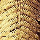 Derrynane Gardens - 'Gold Leaf' by Peter Sweeney