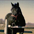 Sweet Black Beauty - The Gifts from Horses by Judi Taylor