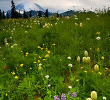 Meadow Beneath the Storm by DawsonImages