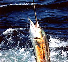 SAILFISH by Earle Waters