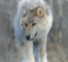 The Wolf by krysleighphoto