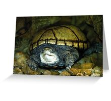 Old Snapper Greeting Card