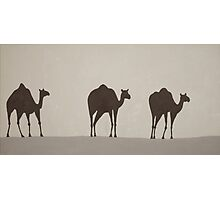 Three Camels Photographic Print