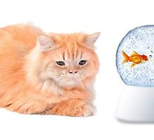 Know About Cat Behaviour by michalyevh