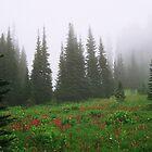 Mt. Rainier National Park by Julia Washburn