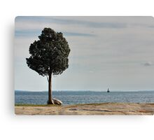 Windy Day in Massachusetts Canvas Print