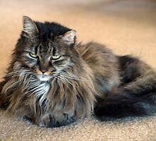 Lounge Cat by kimbarose