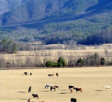Grazing in the Mountains by Lori Walton