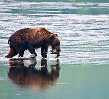 Kodiak Bear Sow with a Pink Salmon. by Albert Dickson