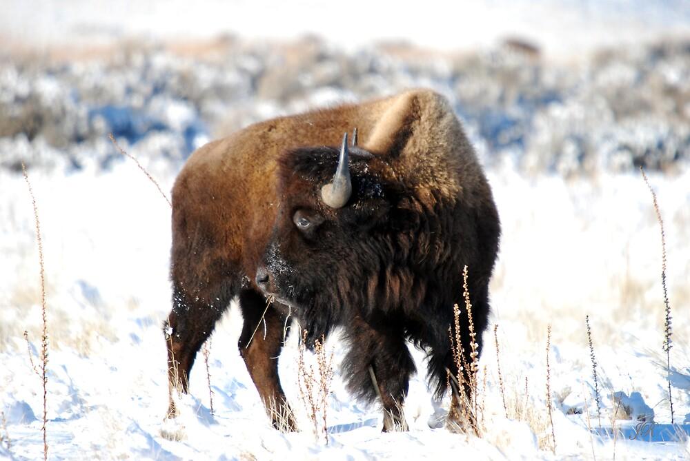 Winter Buffalo by blindwolfspirit