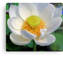 Peaceful Lotus Metal Print