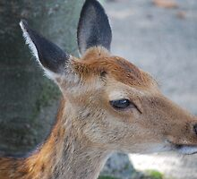 Miyajima Baby by Michael Little