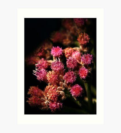 Tiny Flowers Art Print