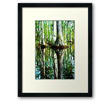 Swamp Tree Reflections Framed Print
