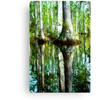 Swamp Tree Reflections Canvas Print