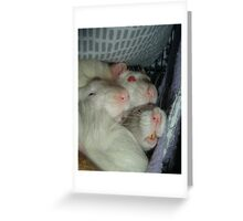 Cramped and warm Greeting Card