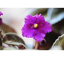 Purple Pot Plant Photographic Print