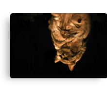 Mirror Cat In Light Canvas Print