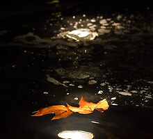 Floating leaves by Lars Clausen