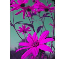 Purple Flowers with Green Sky Photographic Print