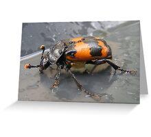 Sexton Beetle Greeting Card