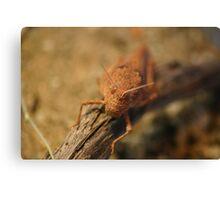 Desert Grasshopper Canvas Print