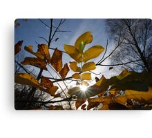 Sun Come Shining Through Canvas Print
