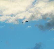 bird by azzoppardo