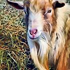 Billy Goat Closeup by Susan Savad