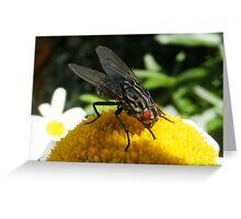 Another red eyed fly Greeting Card